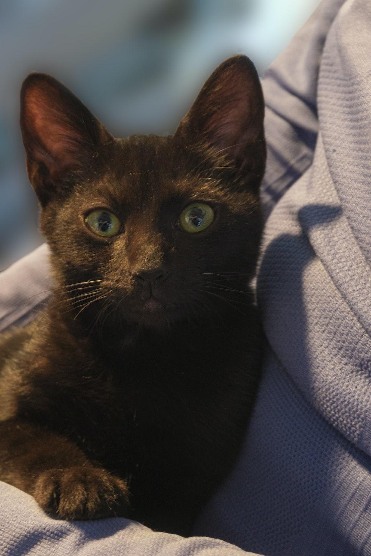 black cat on blue textile