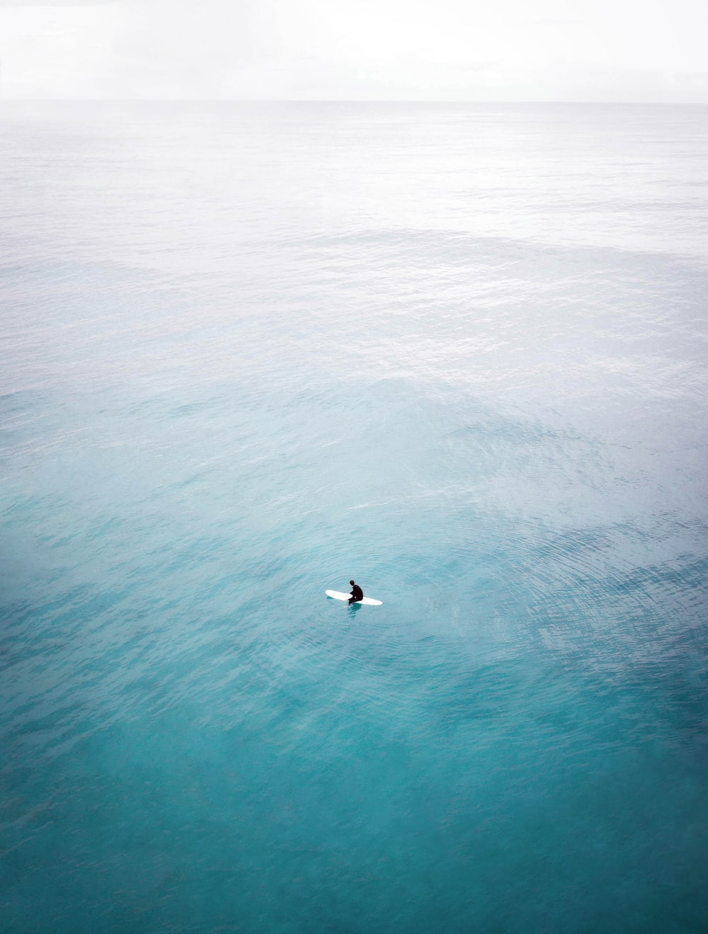 white and black bird flying over sea
