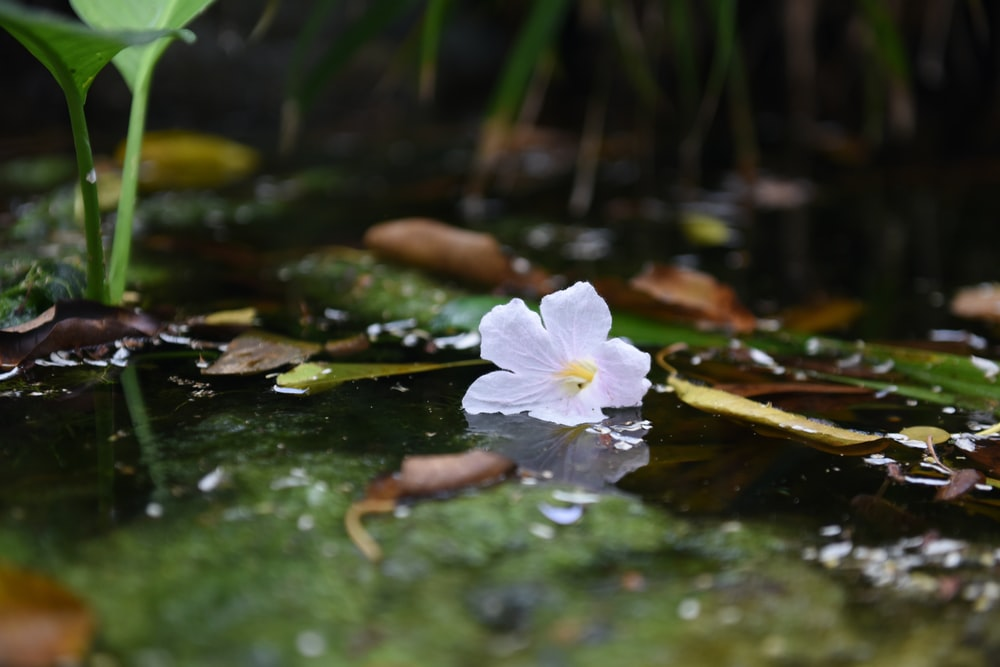 white flower on green water