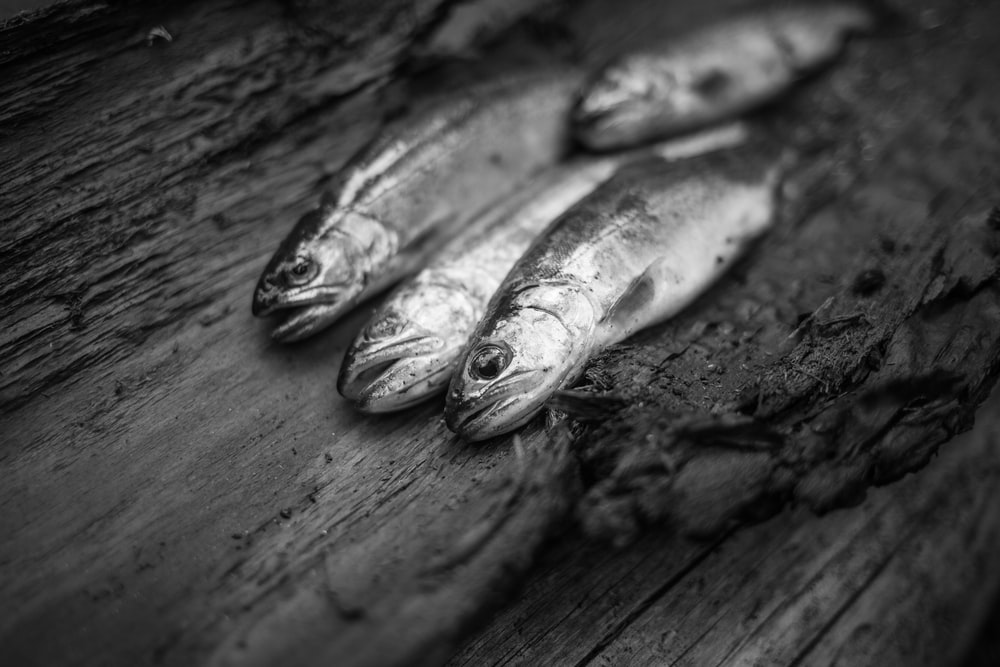 grayscale photography of fish on wooden surface