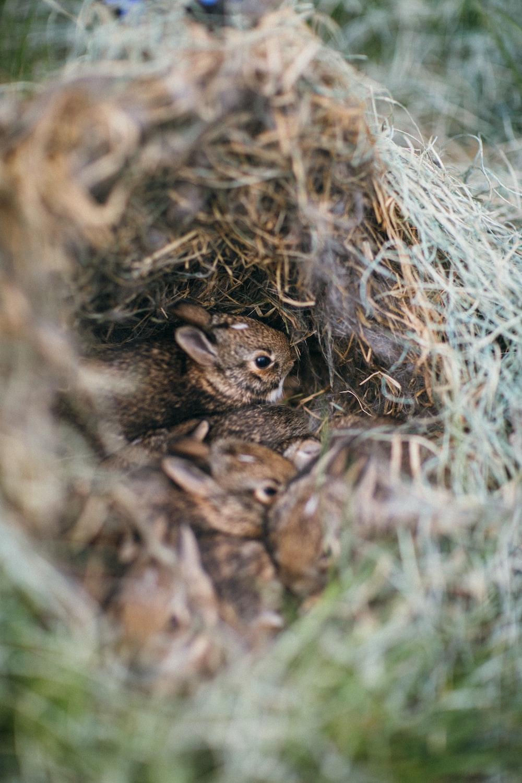 brown squirrel on brown nest