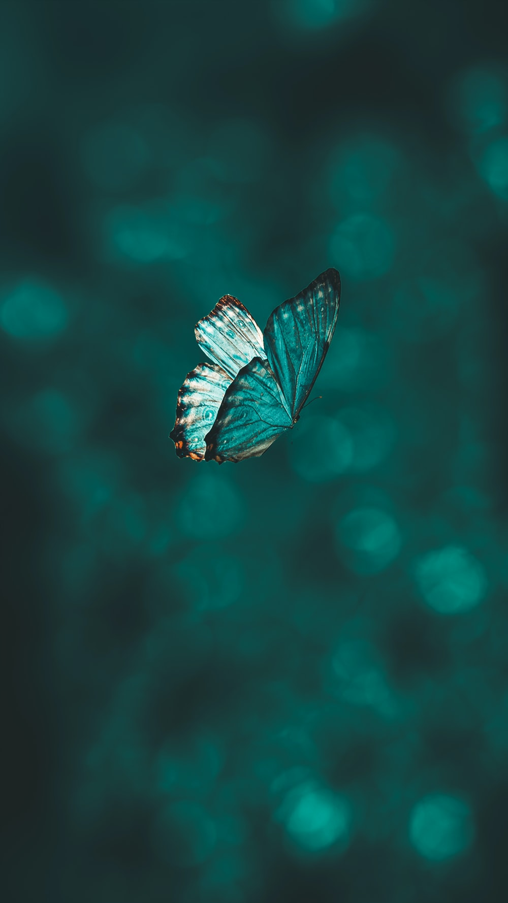 blue and black butterfly in close up photography
