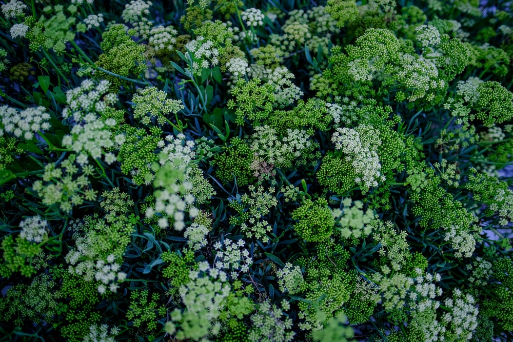 white and green flower plants
