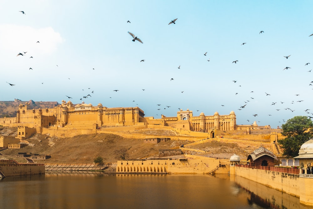 birds flying over river during daytime