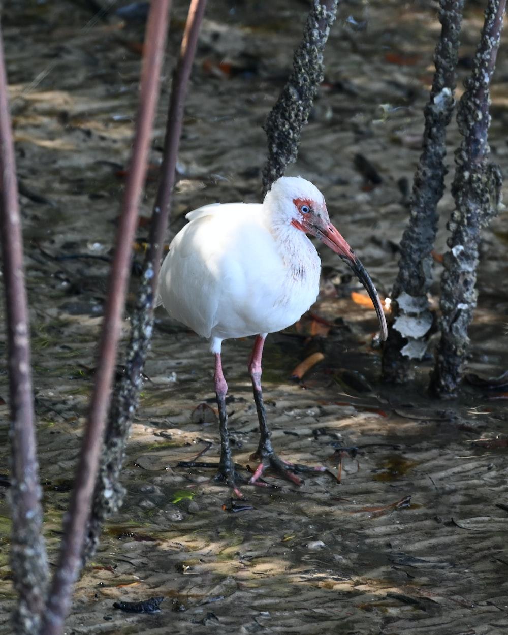 white bird on water falls