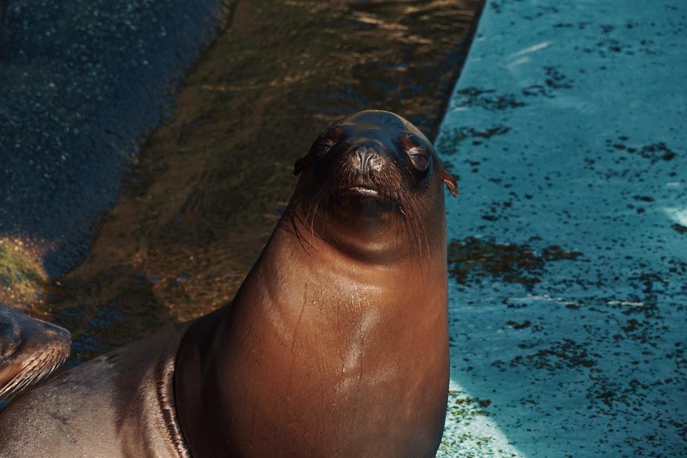 seal in water during daytime