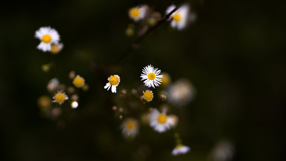 white and yellow daisy flowers in bloom during daytime