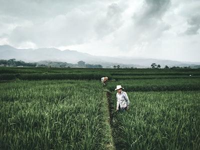 Sungai Petani girl in white dress walking on green grass field during daytime