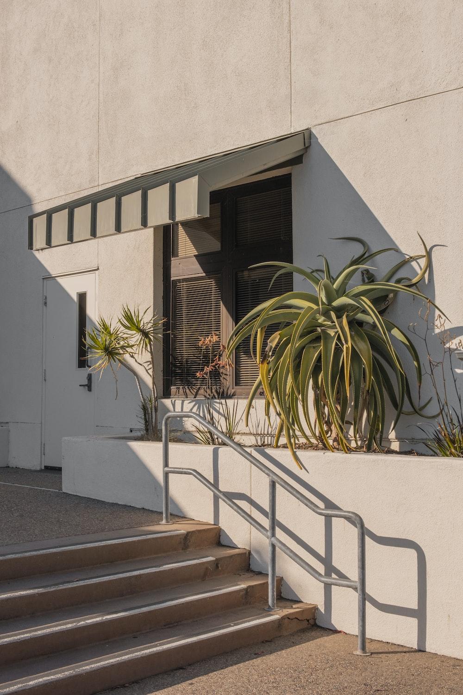 green palm tree beside white concrete building