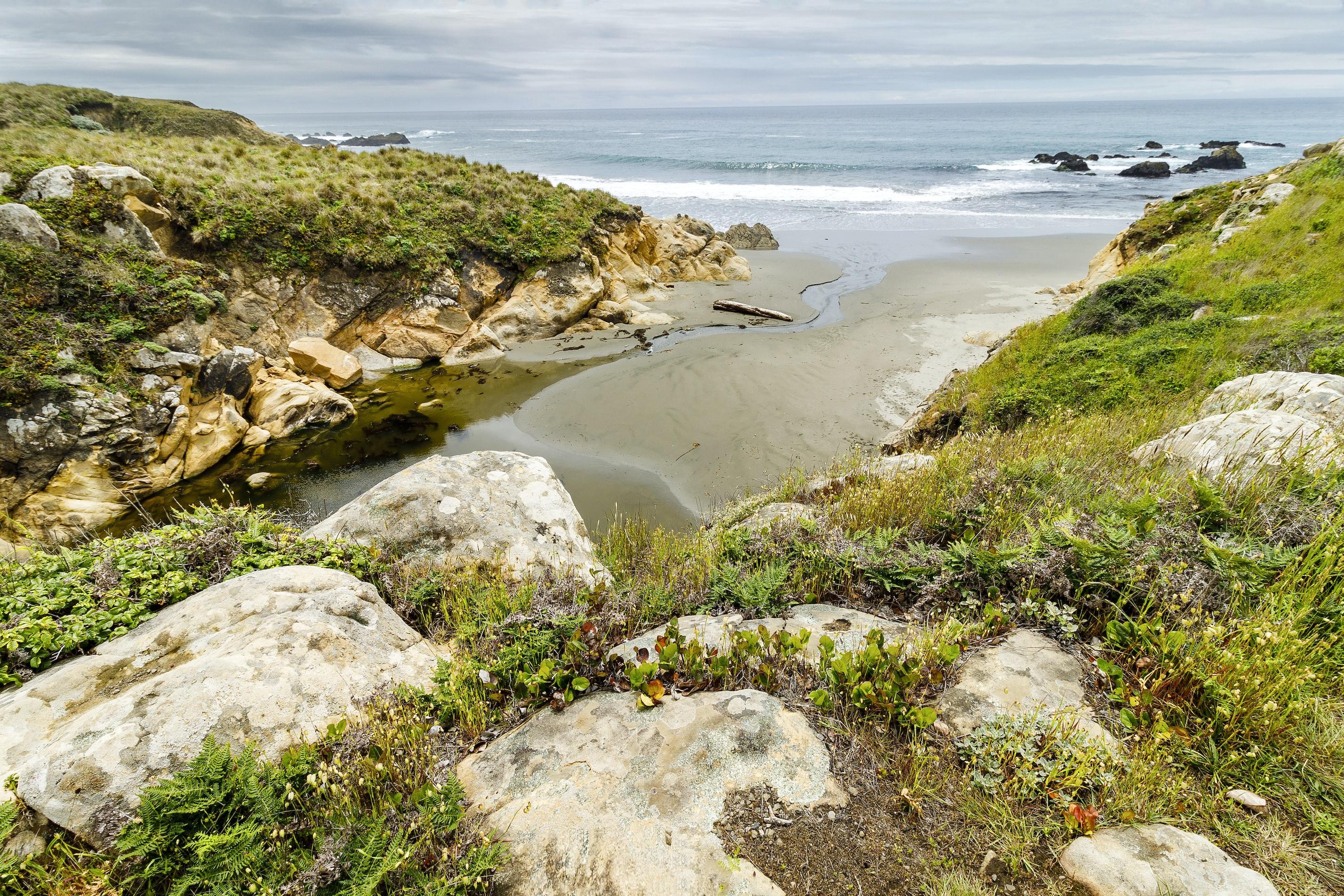 Green covered beach in Sonoma, CA