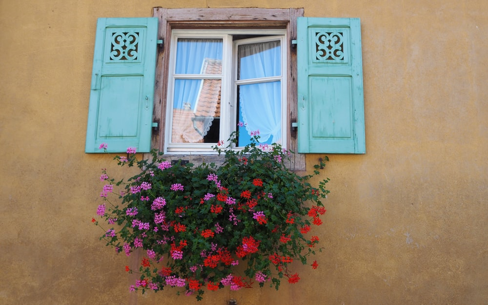 pink flowers on window during daytime