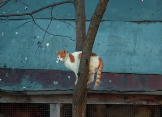 orange and white cat on tree branch