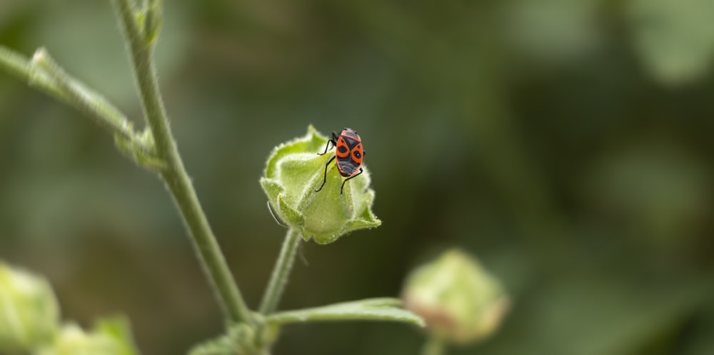 red and black ladybug on green leaf in close up photography during daytime