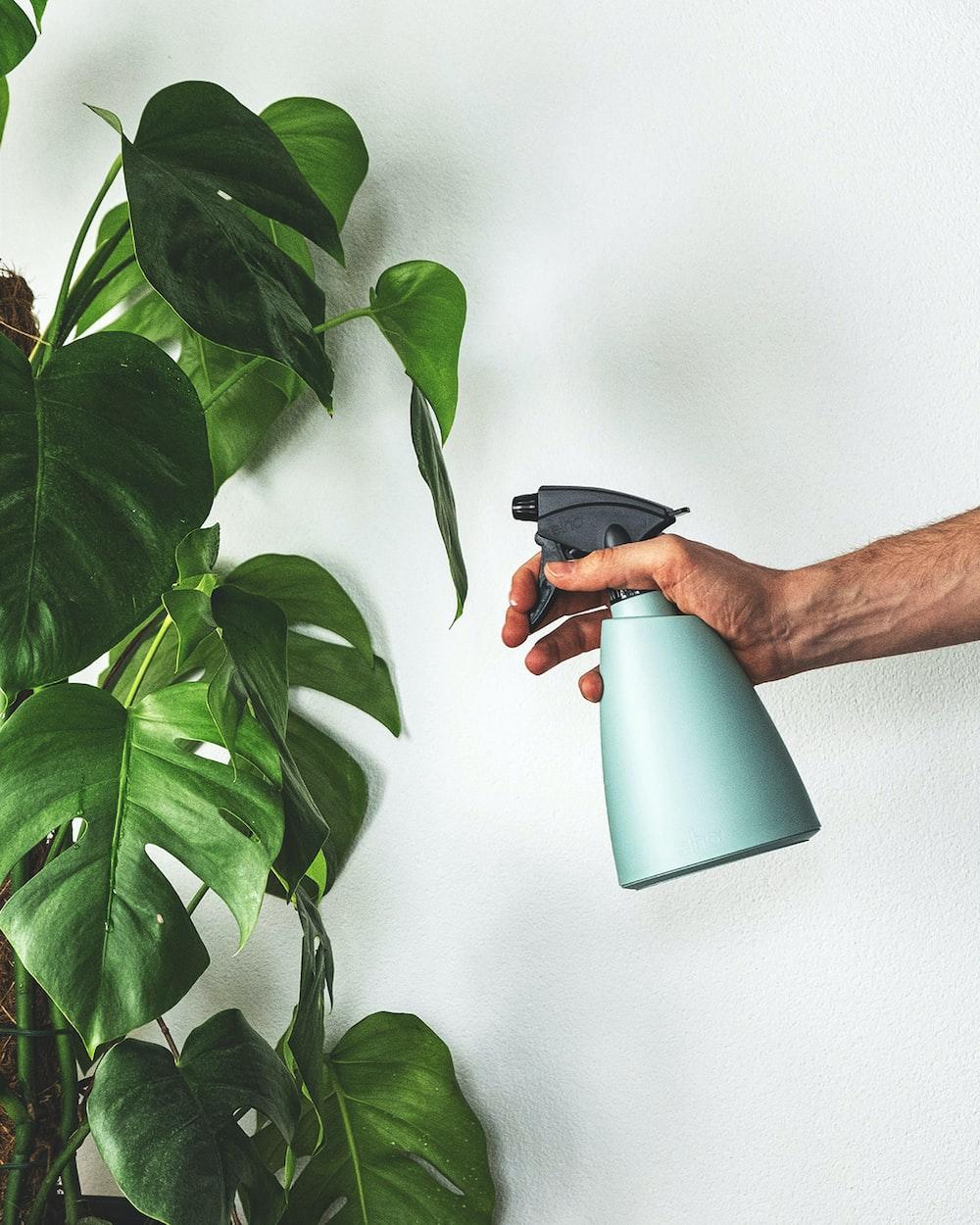 person holding black ceramic mug with green plant