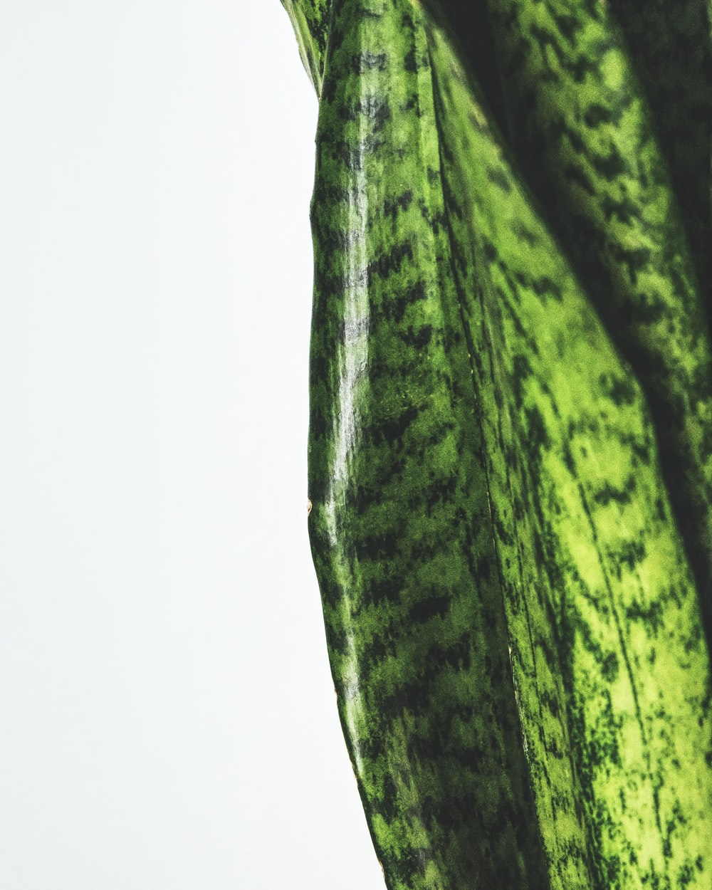 green and black textile on white surface