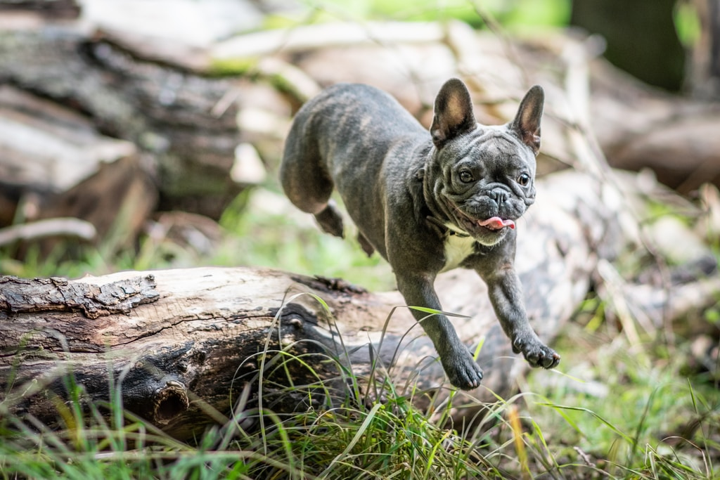 Getting ready to invest? Be the dog, clear the log