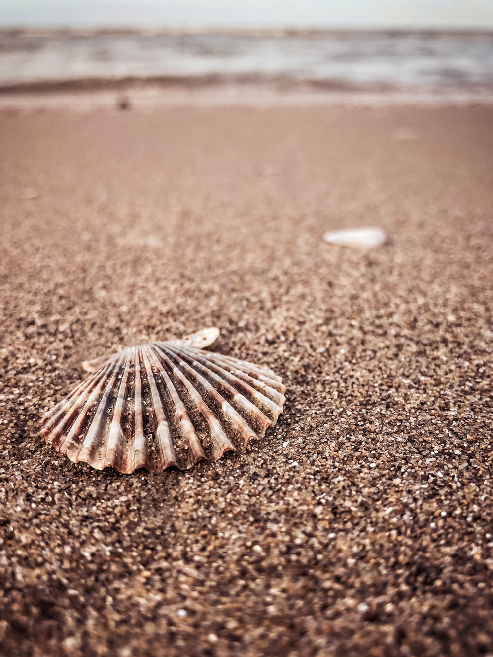 white and brown seashell on brown sand