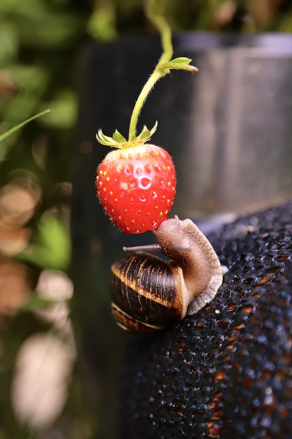 strawberry fruit in close up photography