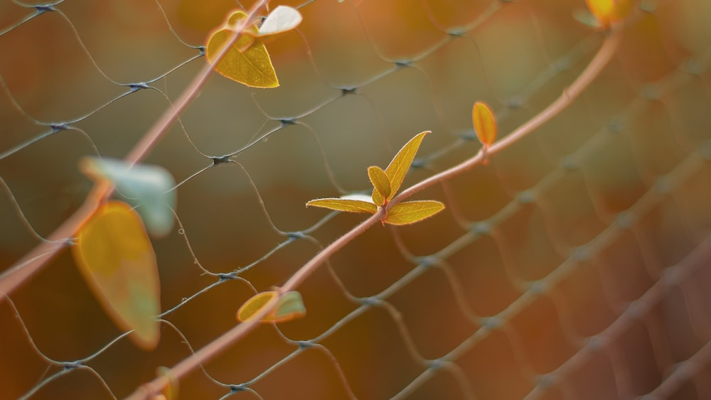yellow and green leaves on gray metal fence