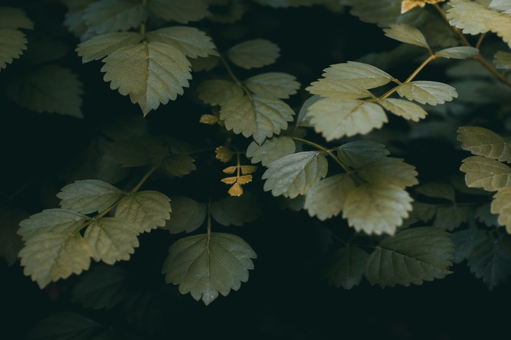 green and yellow leaves in close up photography