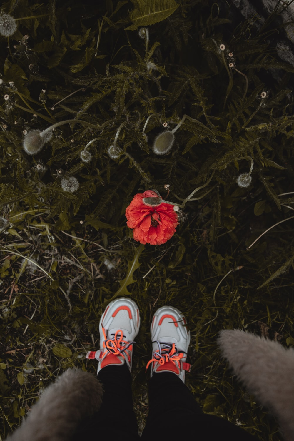 person wearing white and red sneakers standing on dried leaves