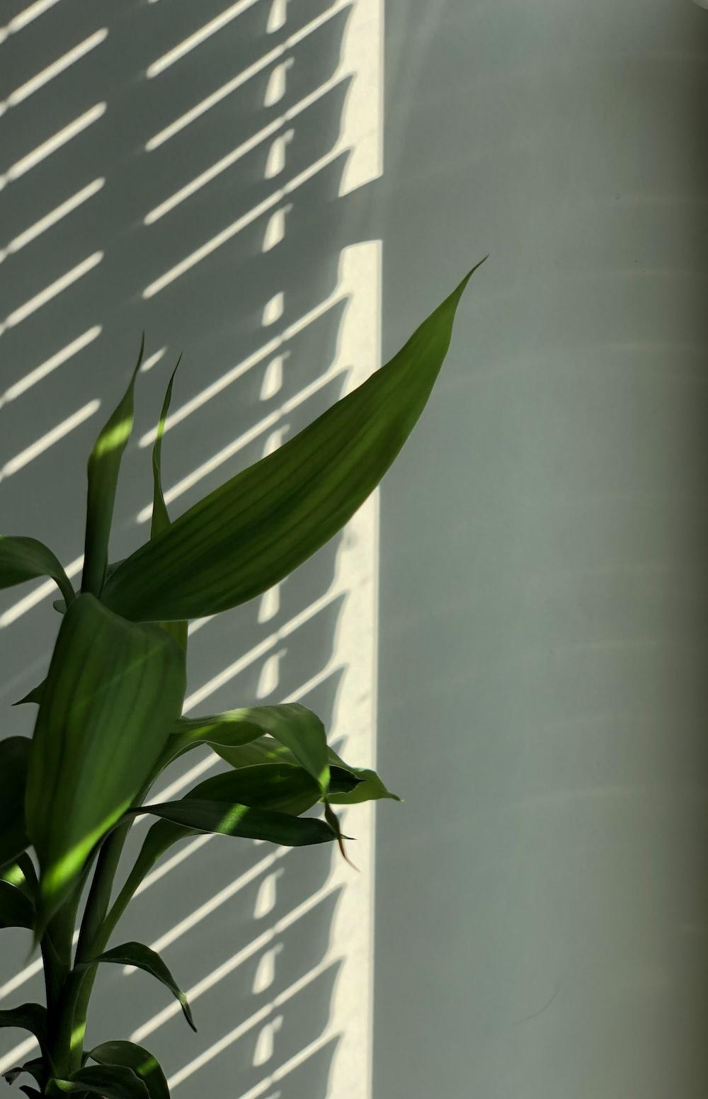 green plant near white window blinds