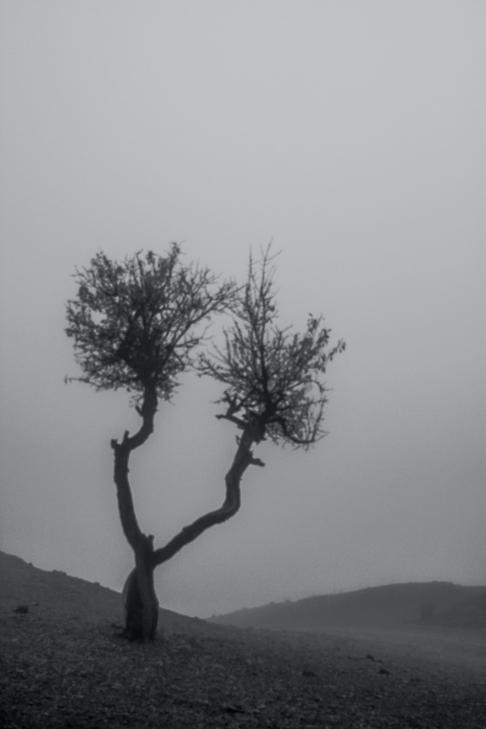 leafless tree on hill during daytime