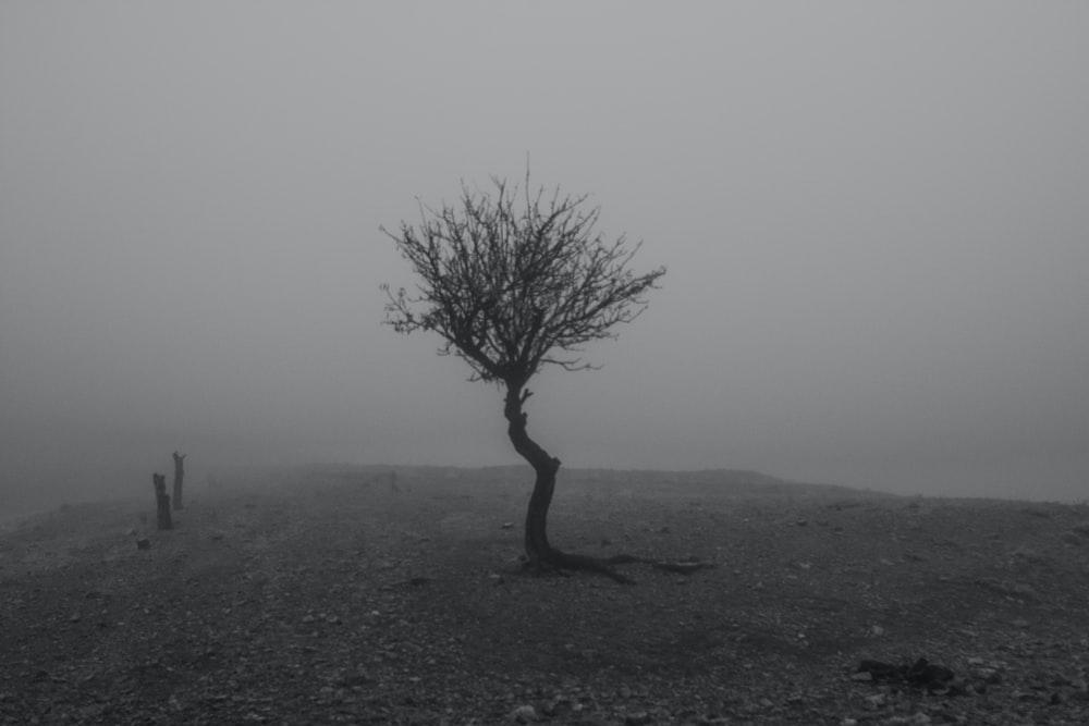 leafless tree on black field