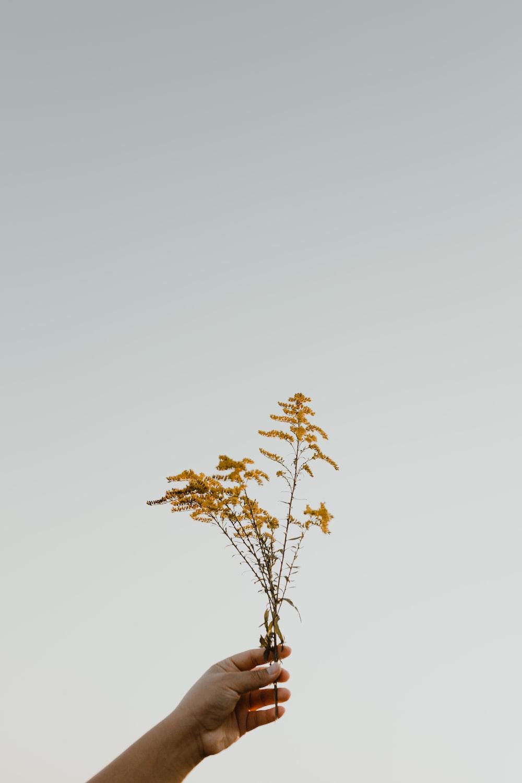 brown maple tree under white sky