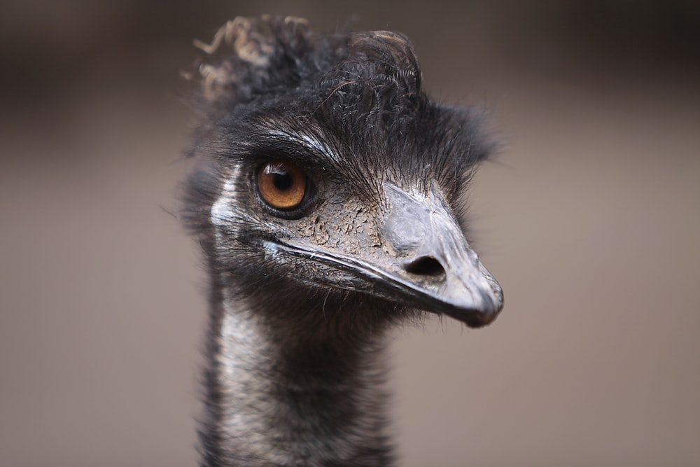 brown ostrich in close up photography