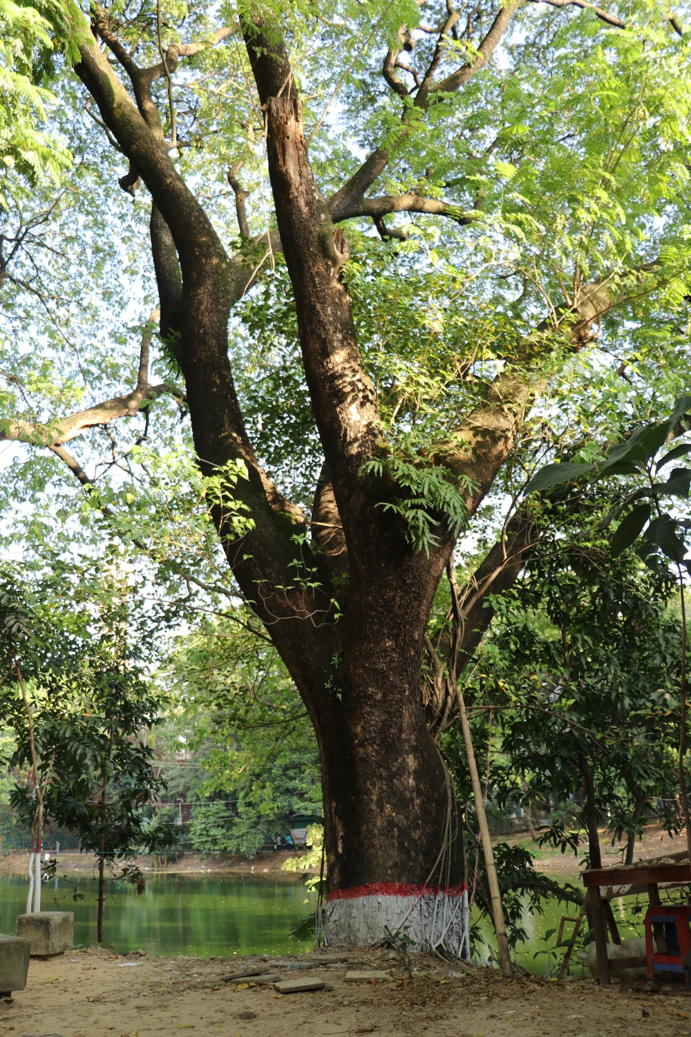 green and brown tree during daytime