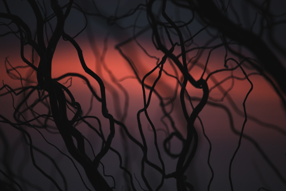 silhouette of tree branches during sunset