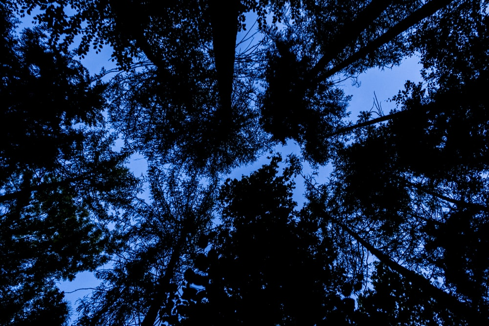 worms eye view of trees during daytime