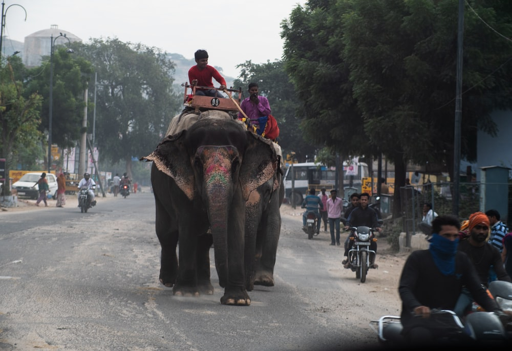 people riding on elephant during daytime
