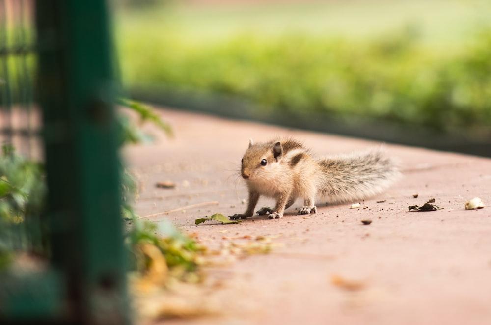 brown squirrel on brown concrete floor during daytime