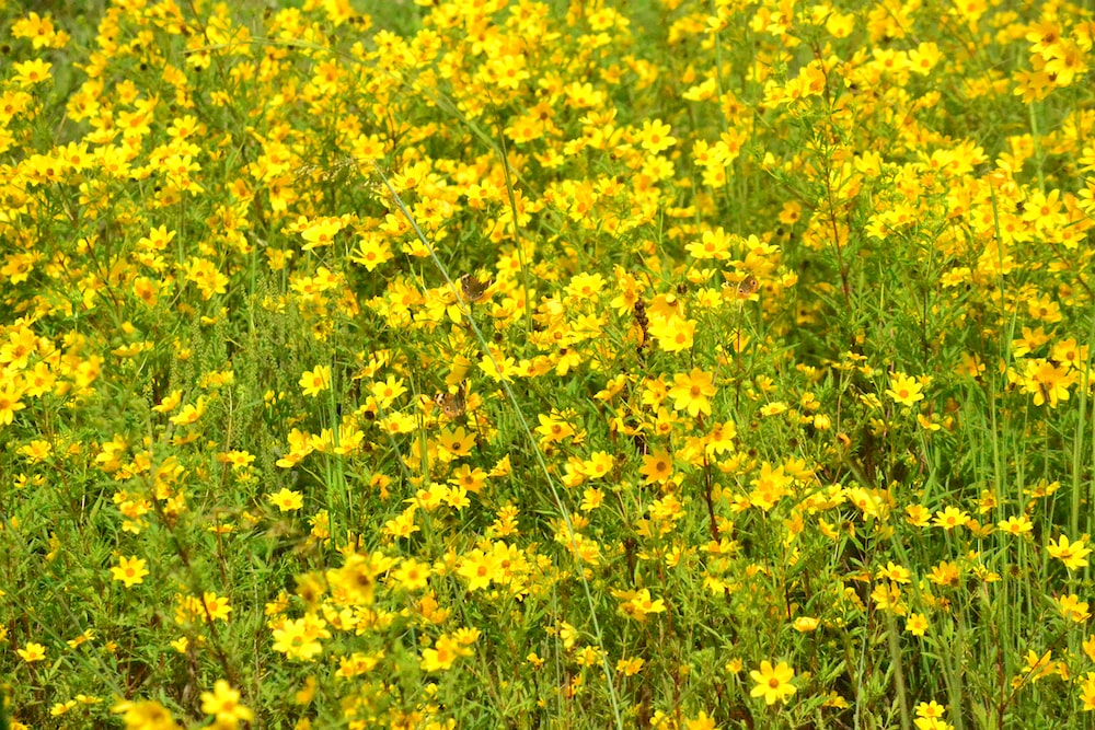 yellow flower field during daytime