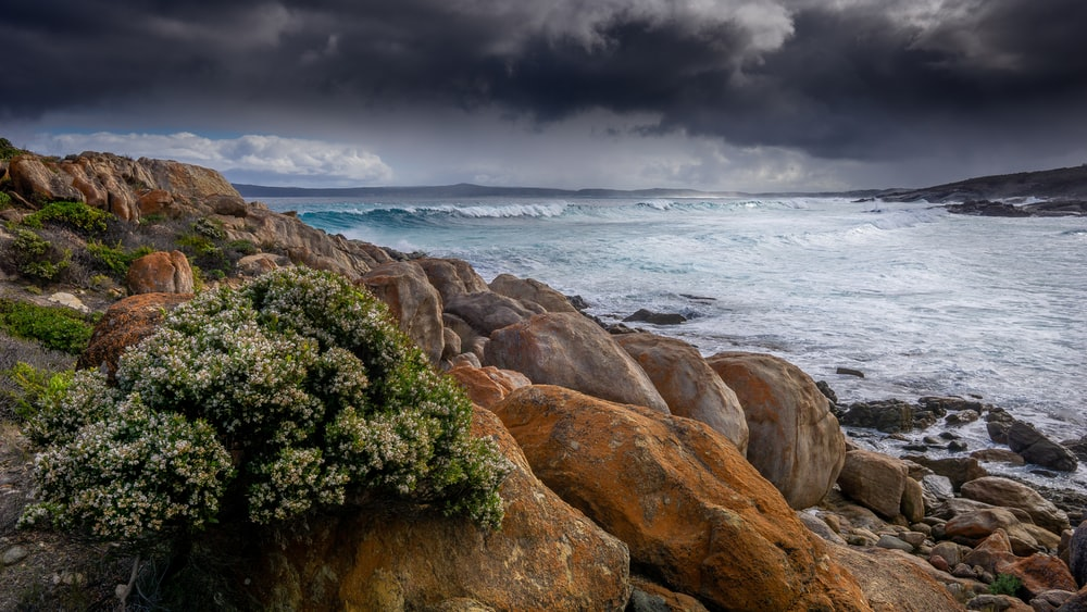 green trees on brown rocky mountain beside sea under gray clouds