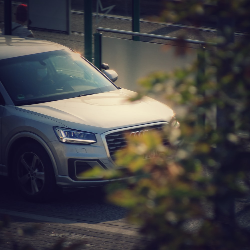 white car parked near green plants during daytime