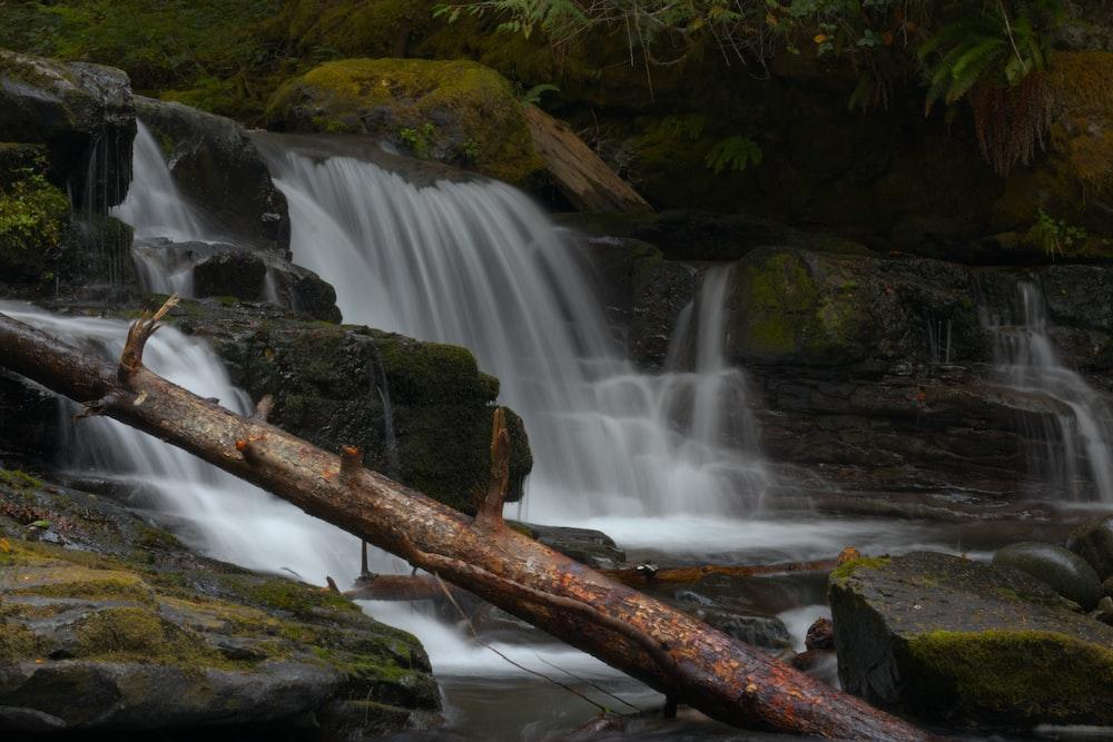 brown tree trunk near waterfalls