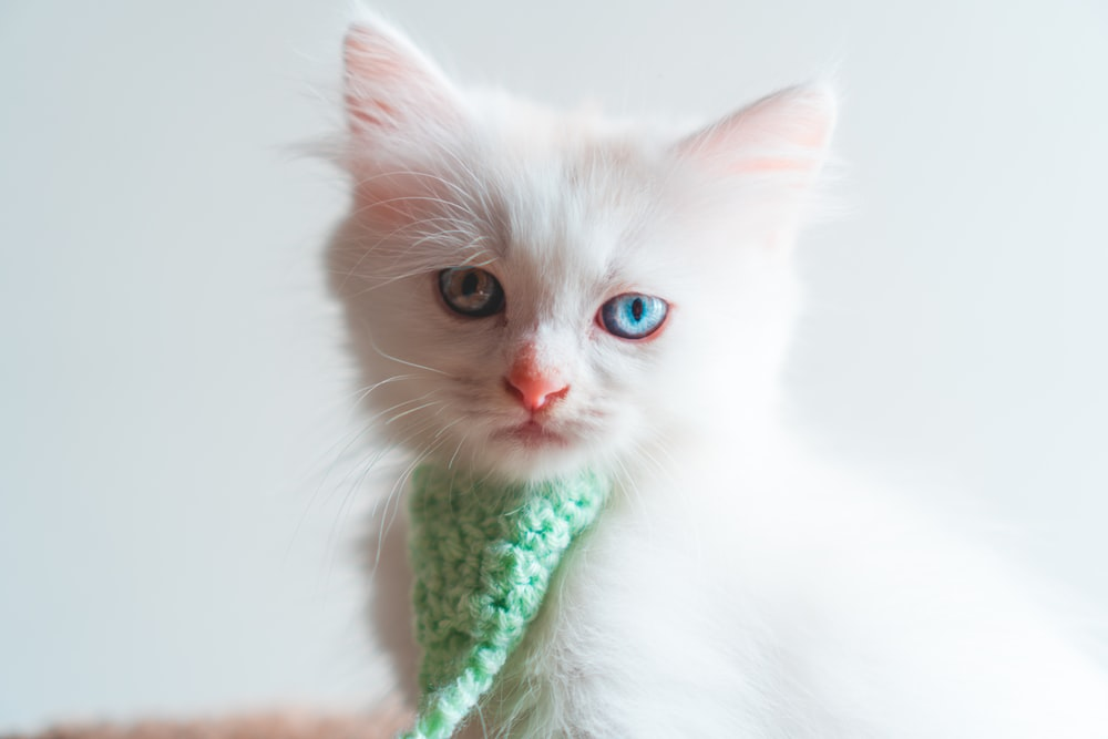white cat in green and white scarf