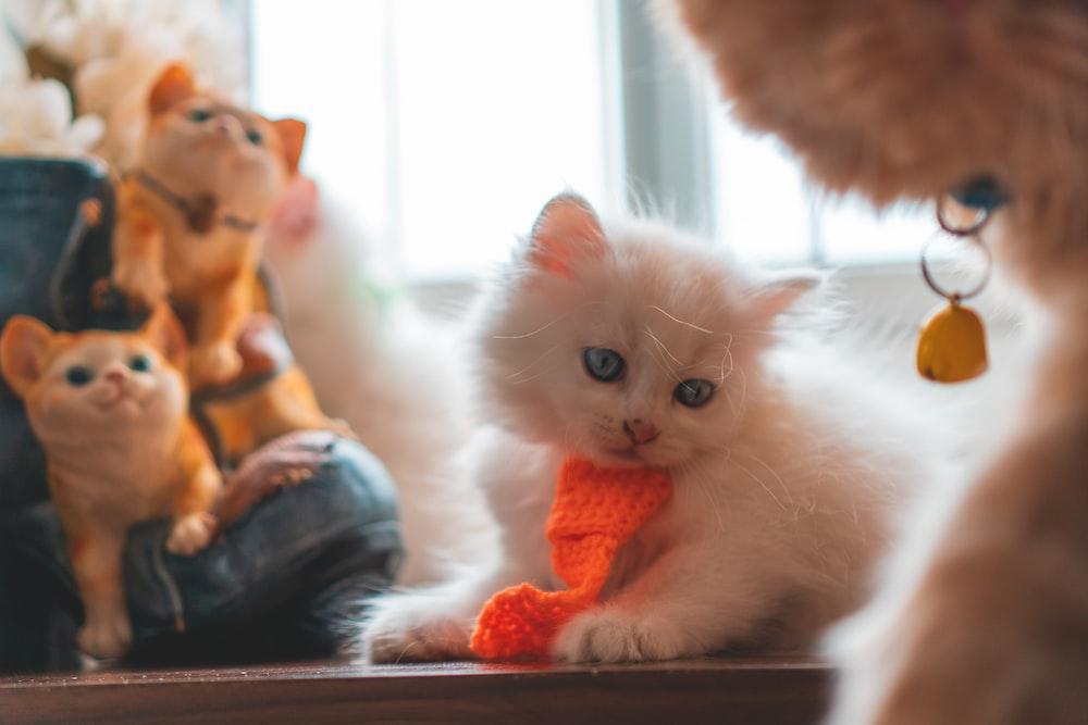 white kitten on brown wooden table