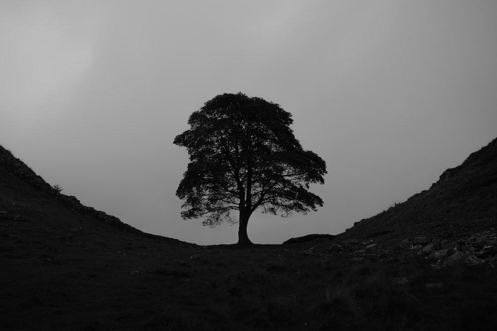 black bare tree on black hill