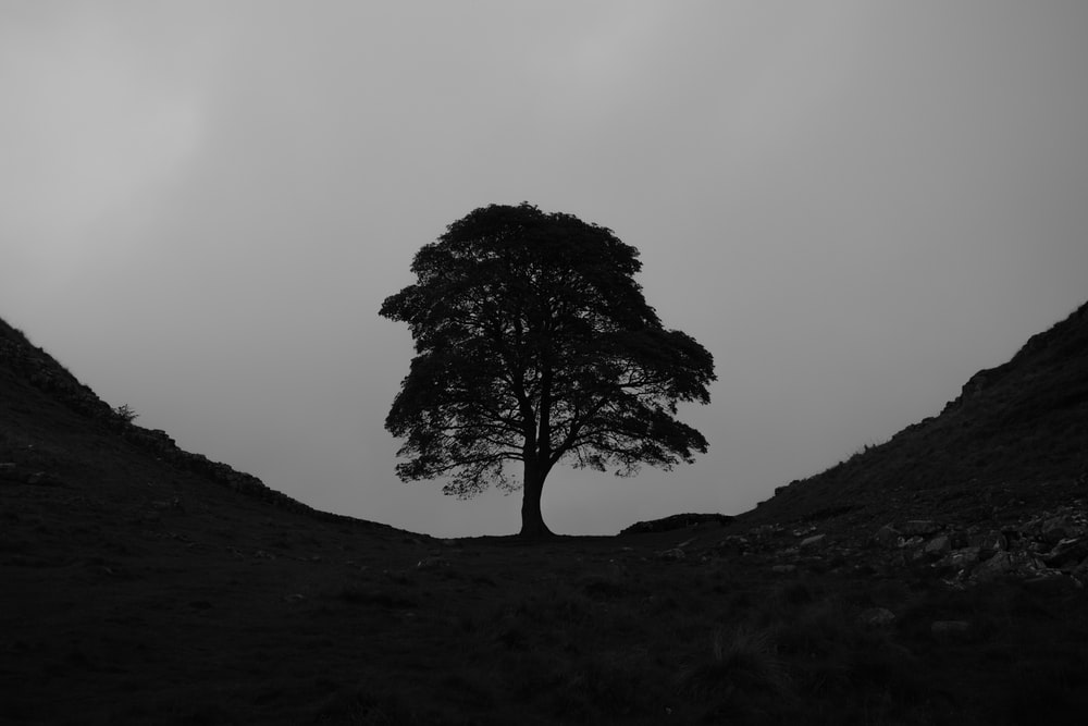 black bare tree on black hill