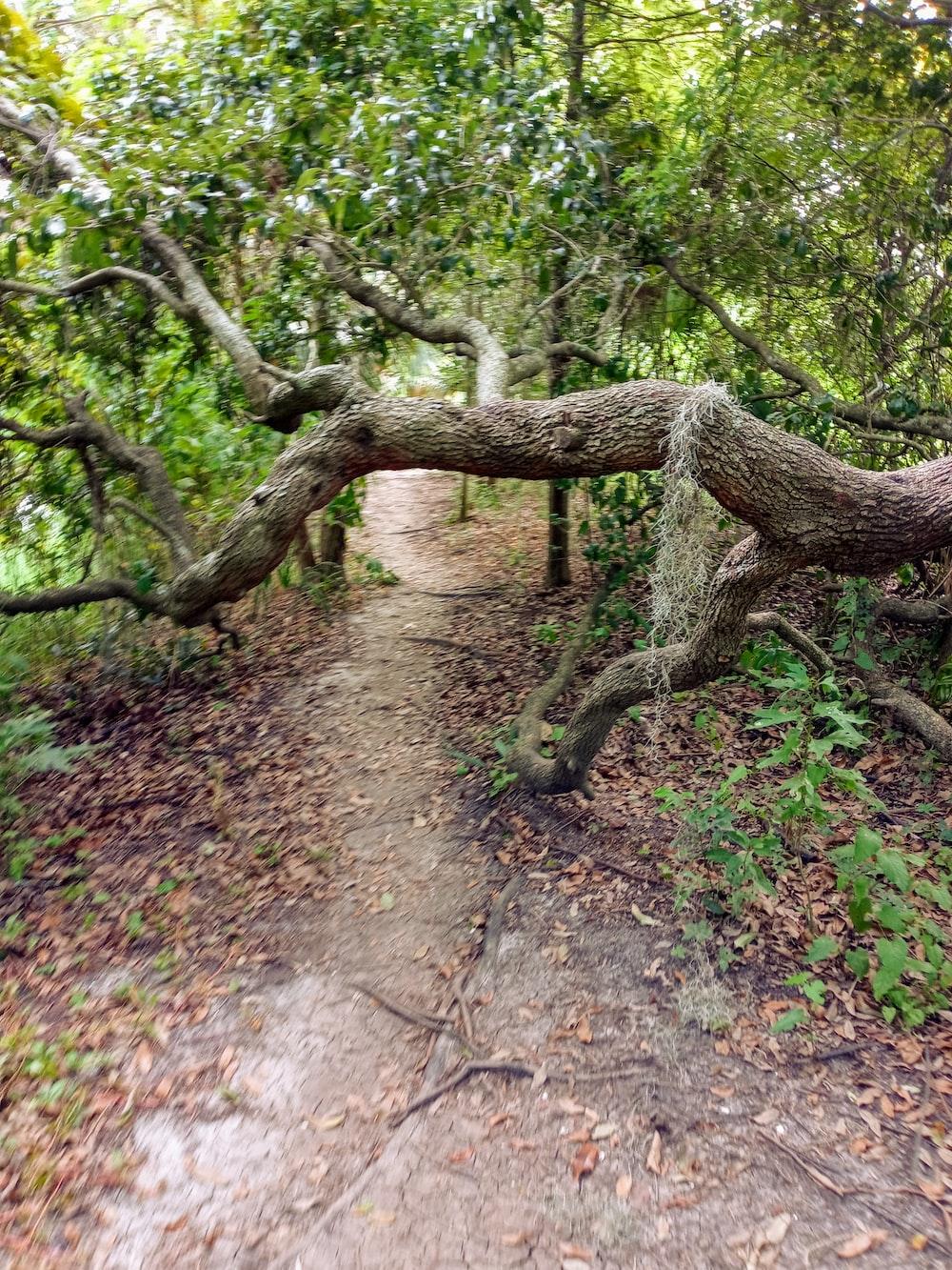 brown tree trunk on brown dirt ground