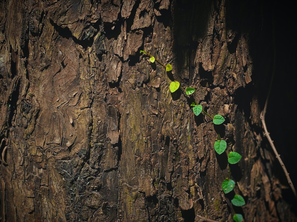 green plant on brown tree trunk