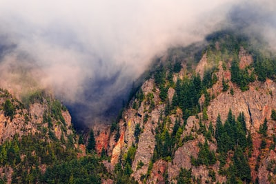 green trees on mountain during foggy day pacific northwest teams background
