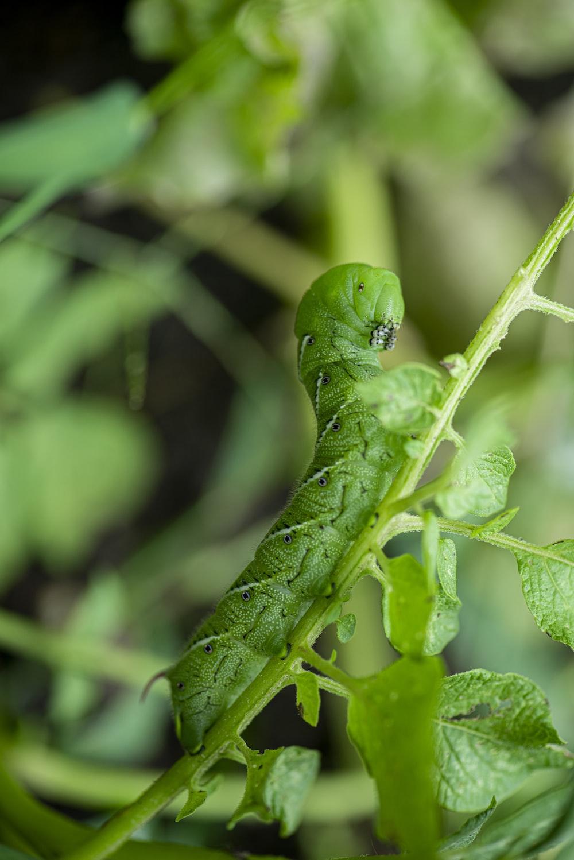 green caterpillar on green leaf