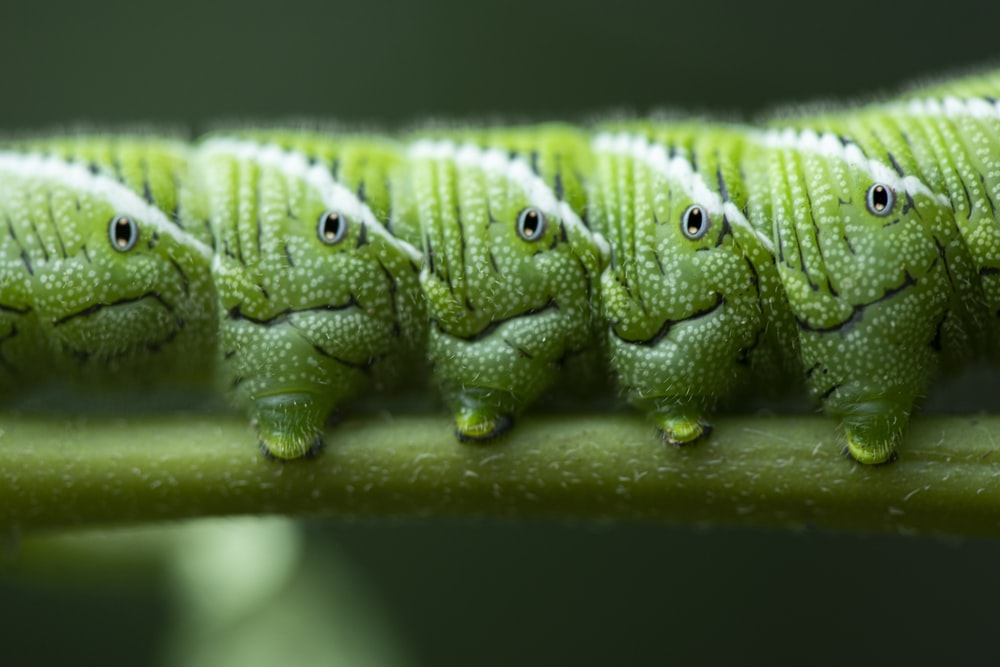 green crocodile plush toy on green leaf