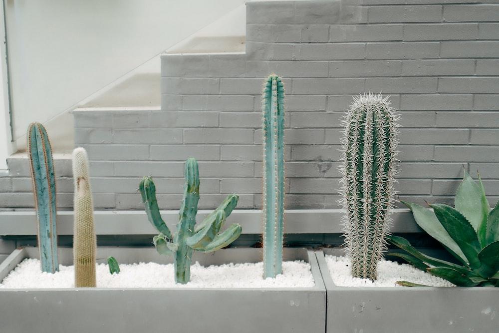 green cactus plant on white ceramic pot