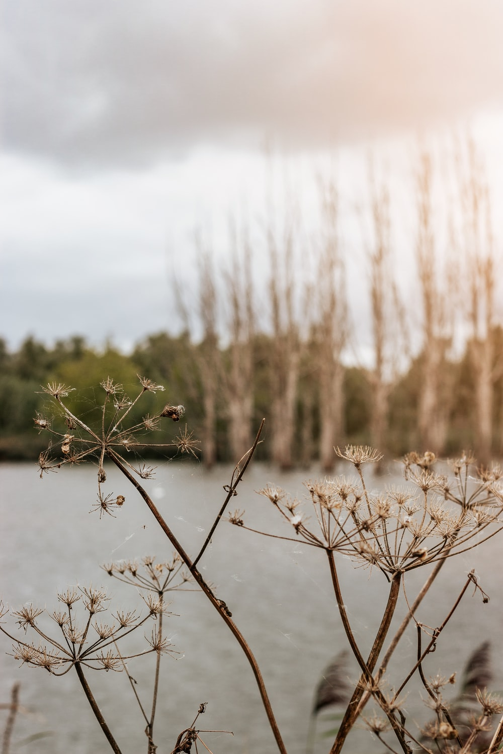 brown dried plant on water during daytime